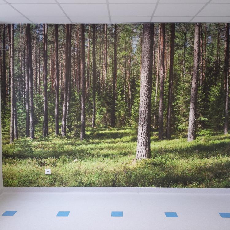 Fototapeta na wymiar las